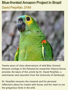 FlockTalk article by DP